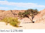 Купить «Жизнь в пустыне. Цветной каньон. Синай. Египет», фото № 2278440, снято 8 января 2011 г. (c) Екатерина Овсянникова / Фотобанк Лори