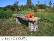 Купить «Спелые томаты на деревянной скамье», фото № 2285816, снято 13 августа 2010 г. (c) Сергей Яковлев / Фотобанк Лори