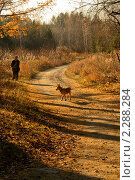 Дедушка с собакой. Стоковое фото, фотограф Серебрякова Екатерина / Фотобанк Лори