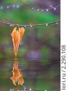Осенний лист. Стоковое фото, фотограф Galina Zakovorotnaya / Фотобанк Лори