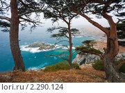 Россия, Приморье, столетние кедры на скалистом пляже. Стоковое фото, фотограф Galina Zakovorotnaya / Фотобанк Лори