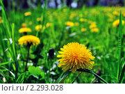 Желтые цветы. Стоковое фото, фотограф Иван Трошин / Фотобанк Лори