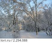 Зимнее утро. Стоковое фото, фотограф Ольга Рунышкова / Фотобанк Лори
