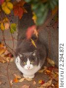 Зеленоглазый кот на улице. Стоковое фото, фотограф Юлия Колтырина / Фотобанк Лори