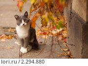 Кот. Стоковое фото, фотограф Юлия Колтырина / Фотобанк Лори