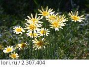Купить «Цветы желтые», фото № 2307404, снято 12 мая 2010 г. (c) Сергей Семин / Фотобанк Лори