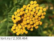 Купить «Цветы желтые», фото № 2308464, снято 25 июля 2010 г. (c) Сергей Семин / Фотобанк Лори