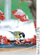 Купить «Большая синица в кормушке», фото № 2317376, снято 2 февраля 2011 г. (c) Федор Королевский / Фотобанк Лори