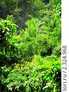 Купить «Тропический лес», фото № 2324968, снято 27 ноября 2010 г. (c) Коваль Василий / Фотобанк Лори
