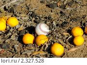 Купить «Бейсбольный мяч и лежащие на земле апельсины», фото № 2327528, снято 14 января 2010 г. (c) Иванова Марина / Фотобанк Лори