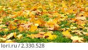 Желтая листва. Стоковое фото, фотограф Roman Firsov / Фотобанк Лори