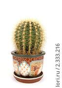 Купить «Декоративные кактус на белом фоне», фото № 2333216, снято 9 февраля 2011 г. (c) Владимир Журавлев / Фотобанк Лори
