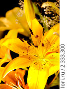 Купить «Букет Лилий», фото № 2333300, снято 27 июля 2009 г. (c) Виктор Топорков / Фотобанк Лори