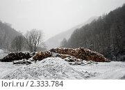 Вырубленный лес. Стоковое фото, фотограф Владимир Алексеев / Фотобанк Лори
