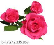 Купить «Розы на белом фоне», фото № 2335868, снято 11 ноября 2010 г. (c) Алла Виноградова / Фотобанк Лори