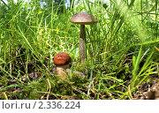 Два гриба. Стоковое фото, фотограф Вячеслав Фасхутдинов / Фотобанк Лори