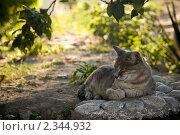 Кошка дремлет на камне. Стоковое фото, фотограф Svetlana Yudina / Фотобанк Лори