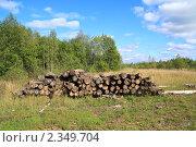 Купить «Вырубленный лес», фото № 2349704, снято 7 сентября 2010 г. (c) Сергей Яковлев / Фотобанк Лори