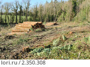 Купить «Вырубка леса», фото № 2350308, снято 16 февраля 2011 г. (c) Татьяна Кахилл / Фотобанк Лори