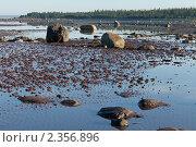 Купить «Камни Белого моря на песчаном дне во время отлива», фото № 2356896, снято 7 июля 2010 г. (c) Михаил Иванов / Фотобанк Лори