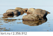 Камни Белого моря. Стоковое фото, фотограф Михаил Иванов / Фотобанк Лори