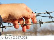 Рука на колючей проволоке. Стоковое фото, фотограф Фотограф / Фотобанк Лори