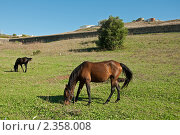 Лошадь. Стоковое фото, фотограф Vasilii Olii / Фотобанк Лори