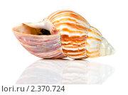 Купить «Морская раковина с отражением», фото № 2370724, снято 26 февраля 2011 г. (c) Сергей Лаврентьев / Фотобанк Лори