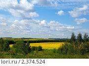 Купить «Летний пейзаж», фото № 2374524, снято 1 июня 2008 г. (c) Татьяна Белова / Фотобанк Лори