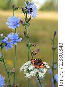 Купить «Полевые цветы  с бабочкой», фото № 2380340, снято 16 июля 2008 г. (c) Татьяна Белова / Фотобанк Лори