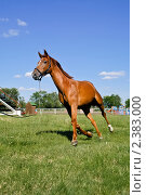 Лошадь на смотровой площадке. Стоковое фото, фотограф Виктор Березин / Фотобанк Лори