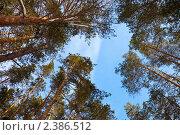 Купить «Зимний пейзаж с сосновым лесом», фото № 2386512, снято 28 февраля 2011 г. (c) Яков Филимонов / Фотобанк Лори