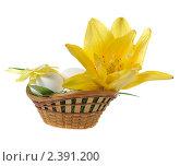 Купить «Пасхальные яйца в корзинке с травой и цветком», фото № 2391200, снято 8 июля 2010 г. (c) Литова Наталья / Фотобанк Лори