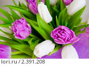 Купить «Букет тюльпанов», фото № 2391208, снято 8 марта 2011 г. (c) Блинова Ольга / Фотобанк Лори