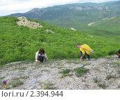 Купить «Сбор трав», фото № 2394944, снято 17 мая 2010 г. (c) Светлана / Фотобанк Лори