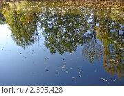 Отражение деревьев в воде. Стоковое фото, фотограф Ефимова Ольга / Фотобанк Лори