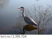 Птица на воде. Стоковое фото, фотограф Влад Куликов / Фотобанк Лори
