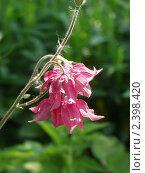 Купить «Цветы», фото № 2398420, снято 31 мая 2005 г. (c) Коваль Максим / Фотобанк Лори