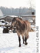 Конь. Стоковое фото, фотограф Иван Носов / Фотобанк Лори