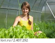 Купить «Девушка собирает салат», фото № 2407292, снято 26 июня 2010 г. (c) Яков Филимонов / Фотобанк Лори
