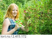 Купить «Девушка собирает крыжовник», фото № 2415172, снято 20 июля 2010 г. (c) Яков Филимонов / Фотобанк Лори