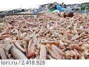 Остатки крабов на мусорной свалке рядом с посёлком Териберка, Мурманской области. Стоковое фото, фотограф Михаил Иванов / Фотобанк Лори