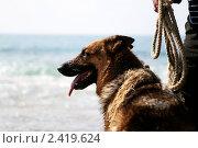 Собака на море. Стоковое фото, фотограф Воронина Милана / Фотобанк Лори