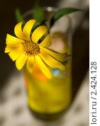 Купить «Желтый цветок в стакане», фото № 2424128, снято 13 августа 2010 г. (c) Gabidullin Oleg / Фотобанк Лори
