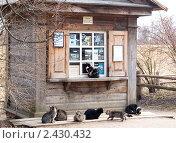 Купить «Семь кошек - очередь в кассу», фото № 2430432, снято 13 марта 2008 г. (c) Владимир Горощенко / Фотобанк Лори