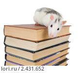 Купить «Белая крыса на стопке книг», фото № 2431652, снято 27 марта 2011 г. (c) паша семенов / Фотобанк Лори