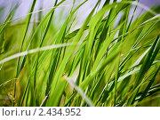 Трава. Стоковое фото, фотограф Сергей Тарасов / Фотобанк Лори
