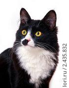 Купить «Необычный черно-белый кот», эксклюзивное фото № 2435832, снято 27 марта 2011 г. (c) Куликова Вероника / Фотобанк Лори