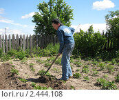Подросток окучивает картофель. Стоковое фото, фотограф Литвинова Евгения / Фотобанк Лори