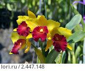 Орхидея. Стоковое фото, фотограф Струкова Светлана / Фотобанк Лори